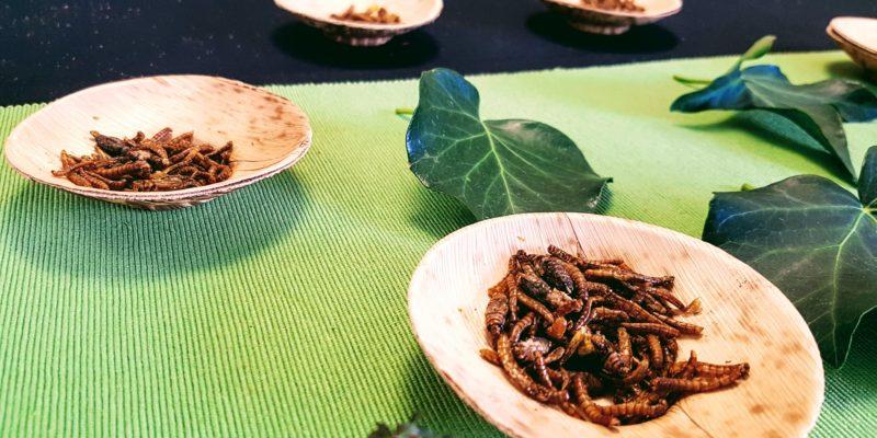 L'animation dégustation d'insectes vous invite à oser goûter !