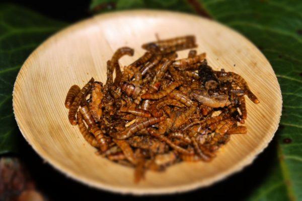 insecte-culinaire-aperitif